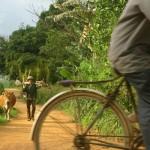 Bicis y vacas en Vietnam
