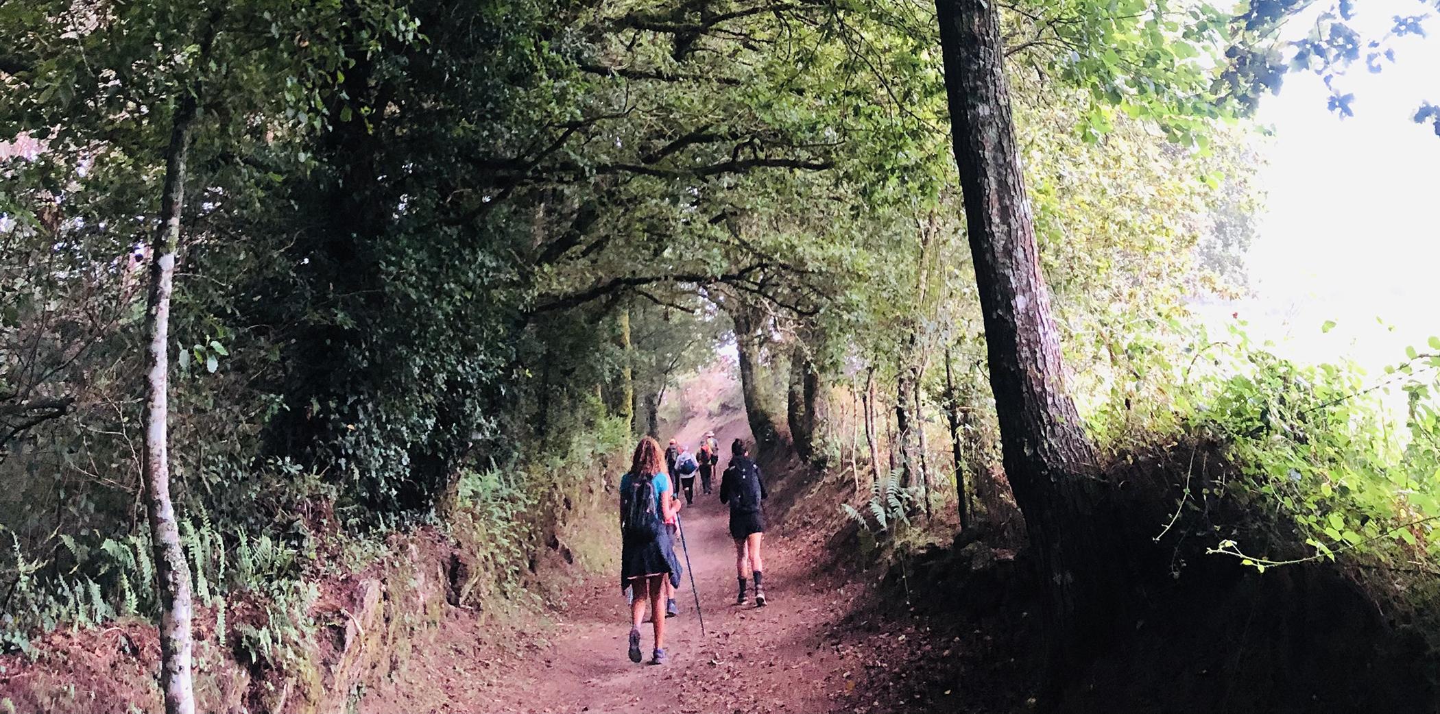 Peregrinos en un bosque entre Palas de Rei y Ribadixo de Baixo