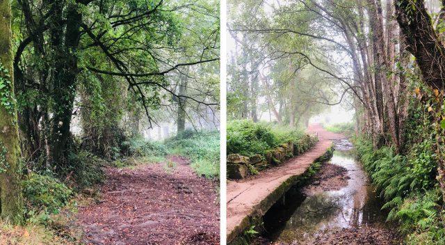 Bosque espeso en Galicia del Camino de Santiago