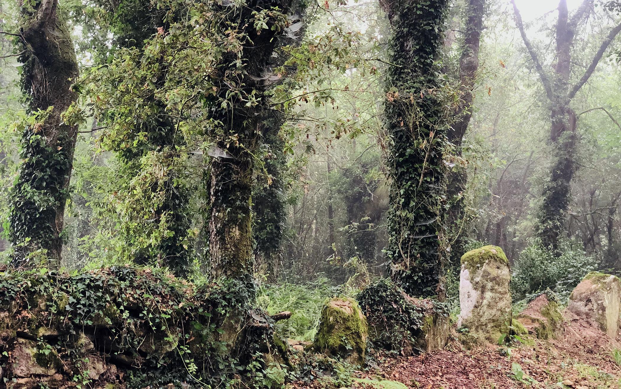 Bosque en la ruta del Camino de Santiago