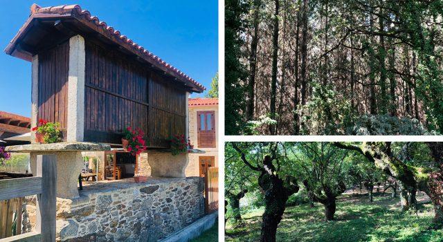 Hórreos y bosques de Galicia