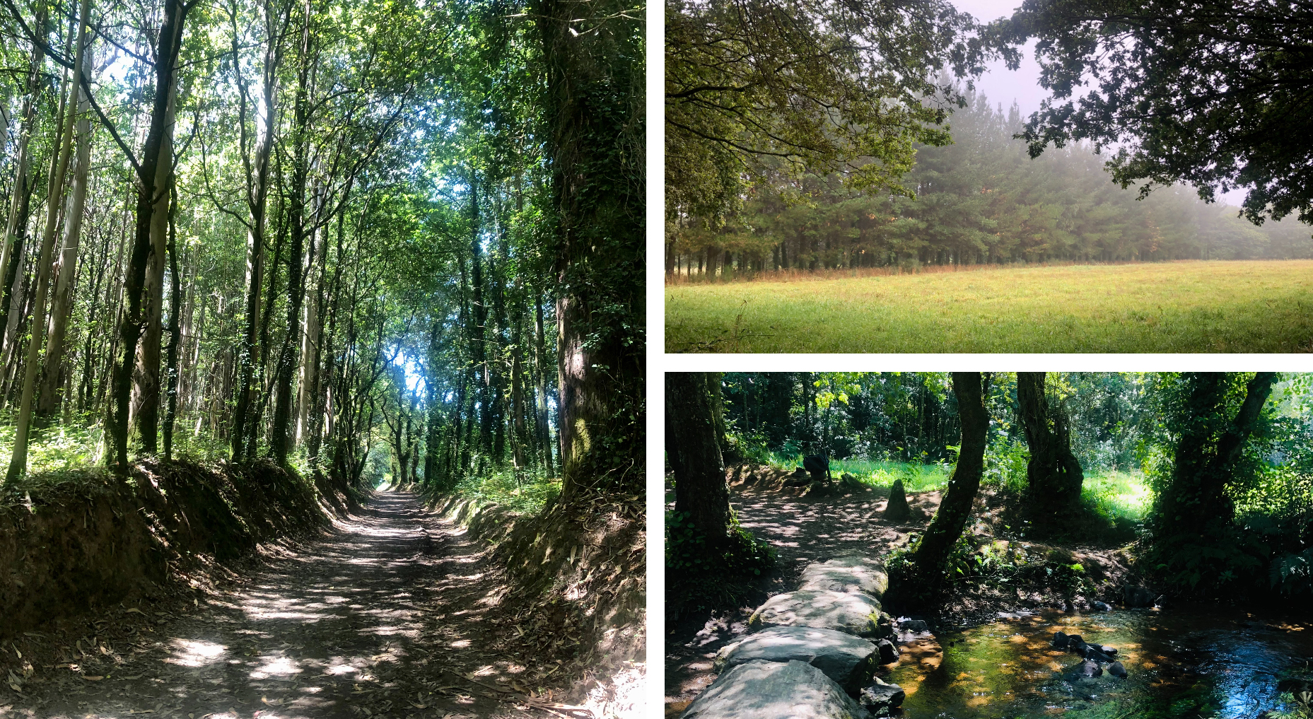Bosques en el Camino de Santiago entre Palas de Rei y Ribadixo de Baixo