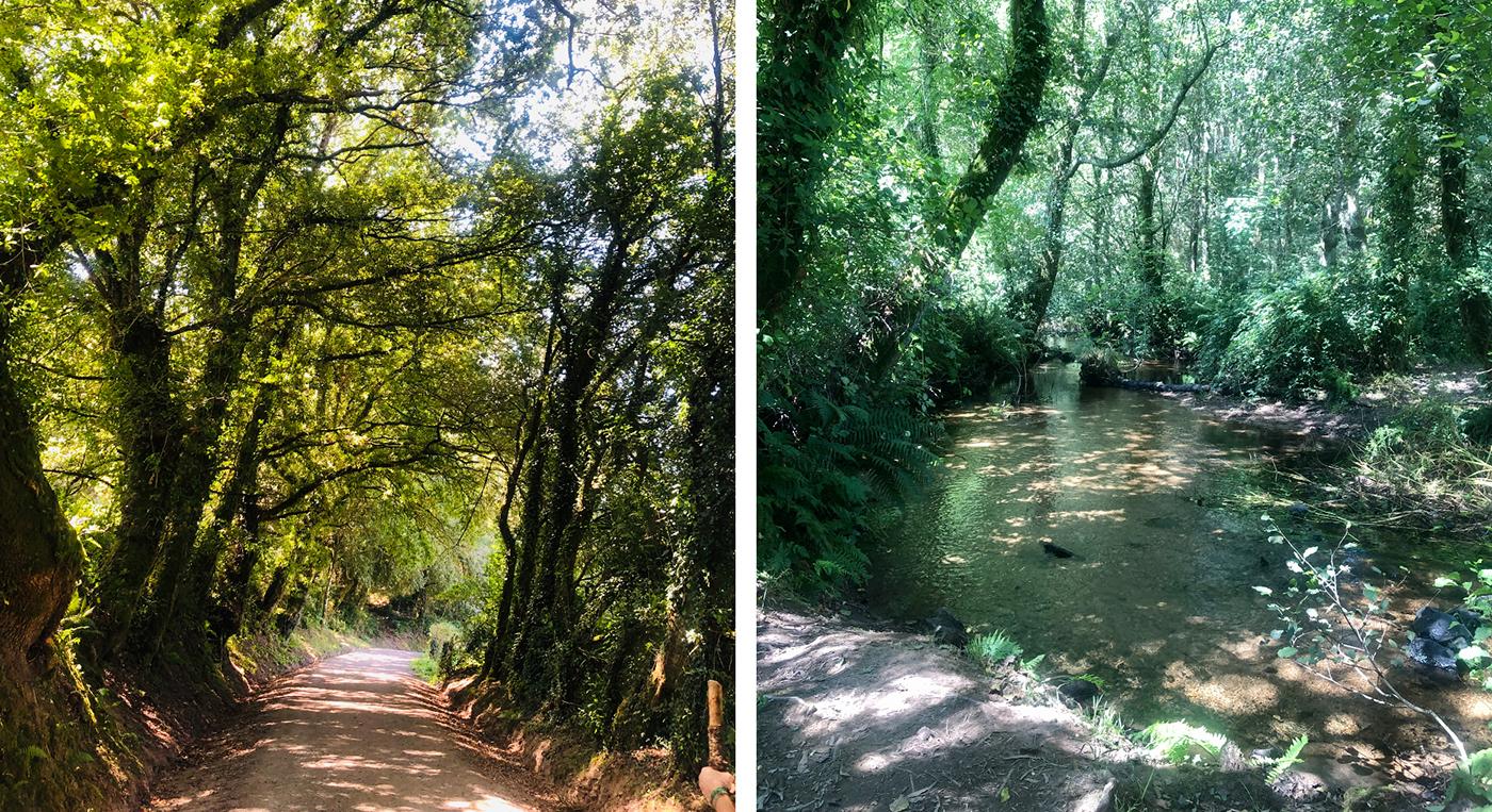 Bosques de Ribadixo de Baixo y río Catasol
